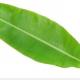 Banana Leaf Cooling Massage: Summer's finest!
